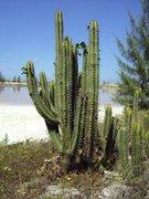 Kaktus in der Saline