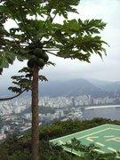 Papaya-Pflanze mit Rio de Janeiro im Hintergrund