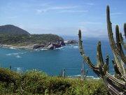 Felsenküste mit Kaktus