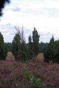 Krelinger Heide